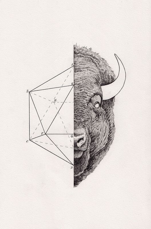 vintage science journal and geometry inspired animals portraits by peter carrington bleaq
