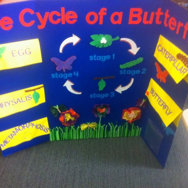 Life Cycle Of A Butterfly Elementary Creations 2nd Grade Science