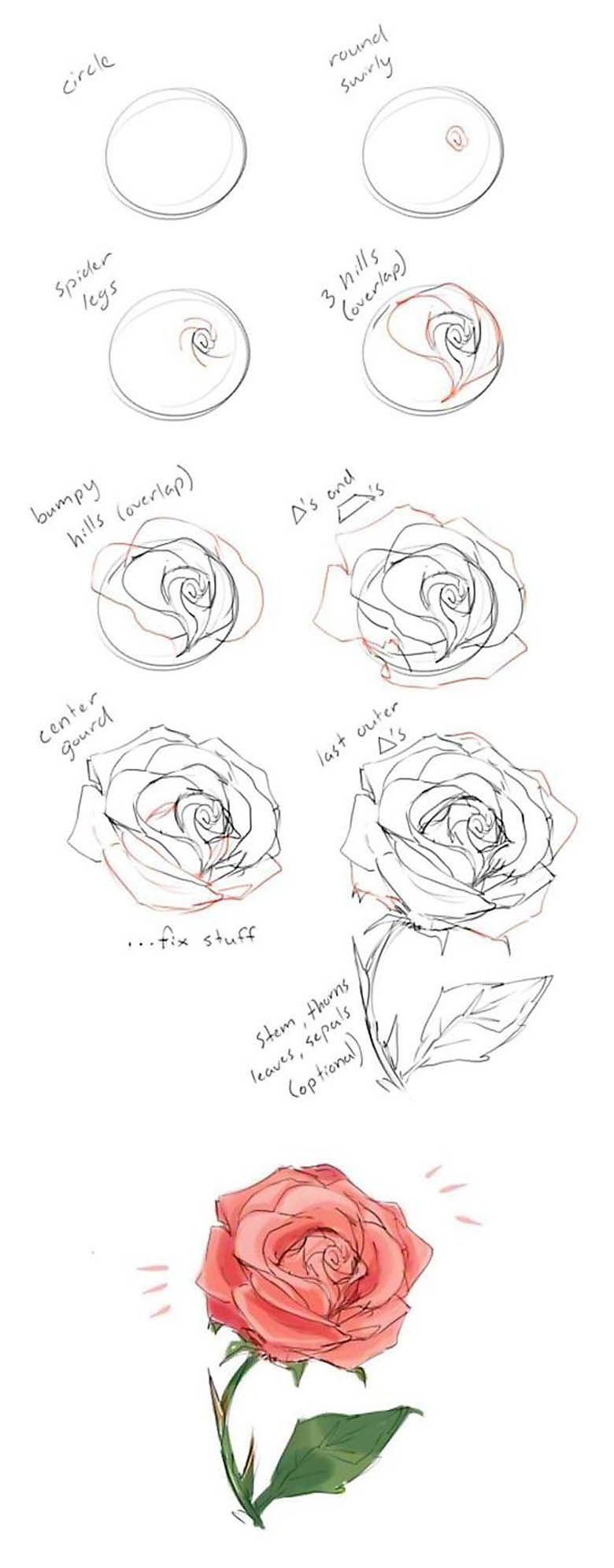 How To Draw A Rose Guide Drawing Flowers On Large Boards Or Walls Flower Line Diagram Simple Of Bud Stock Vector Can Be