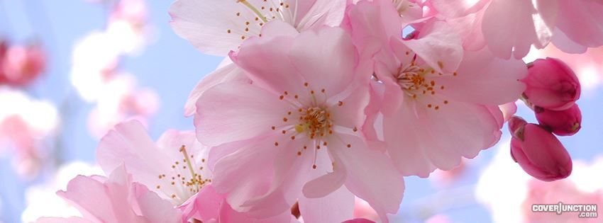 Spring Accommodation Facebook Covers: Pretty Pink Spring Flowers Facebook Cover