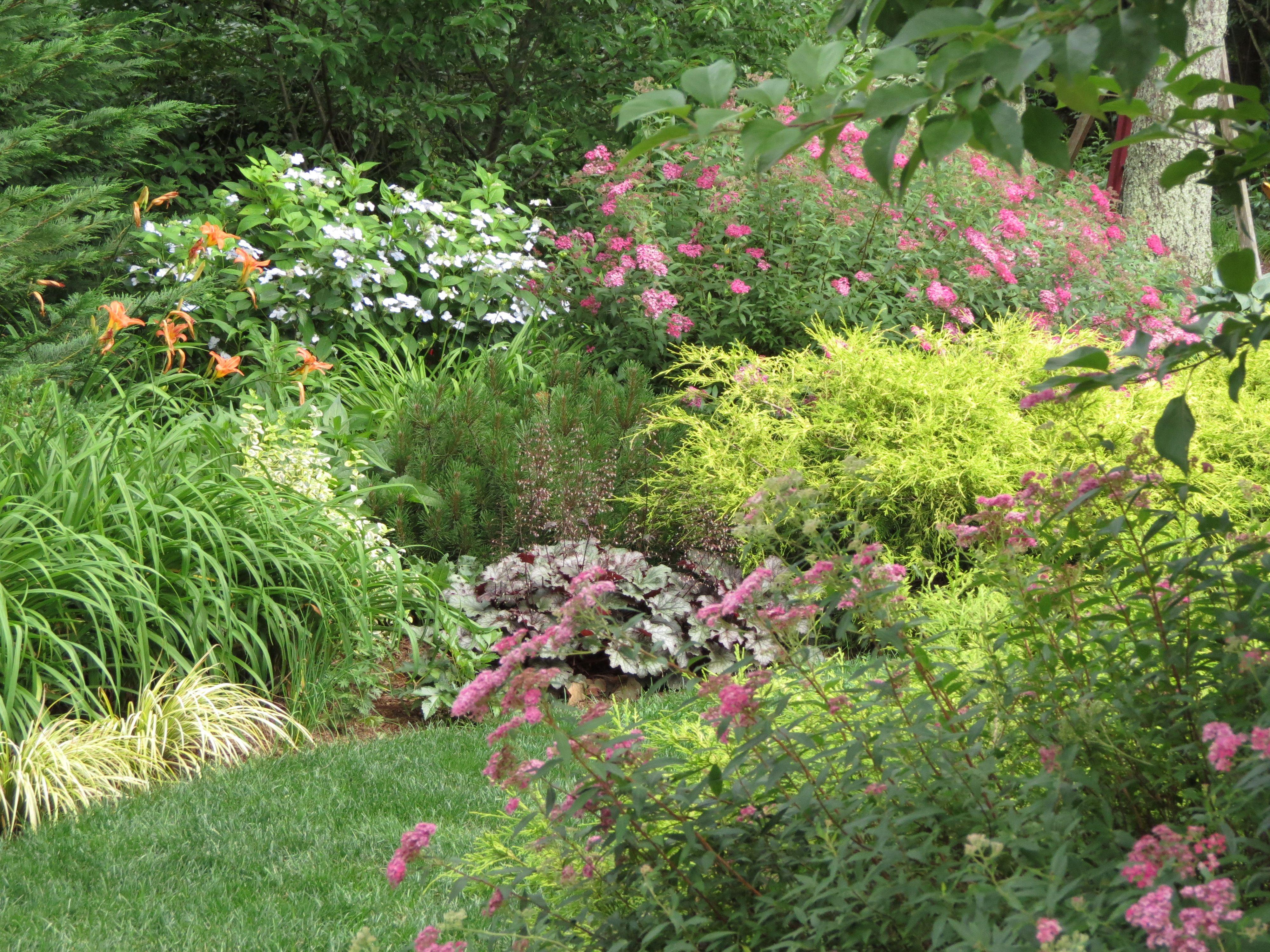 Our Early Summer Garden Plants Companion Planting Summer Garden