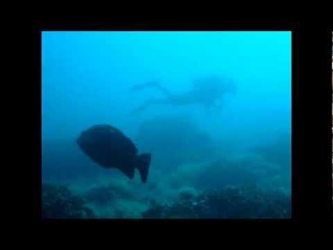 Les Ferranelles - Inmersión en les Illes Medes