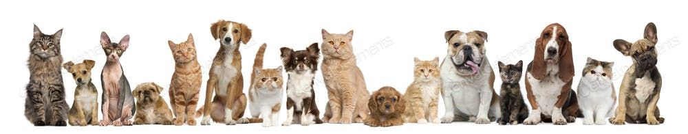 Pictures Of Puppy Dogs And Cats
