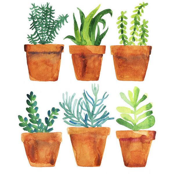 Home Garden 72 BRL Liked On Polyvore Featuring Outdoors Outdoor Plant DrawingCloud