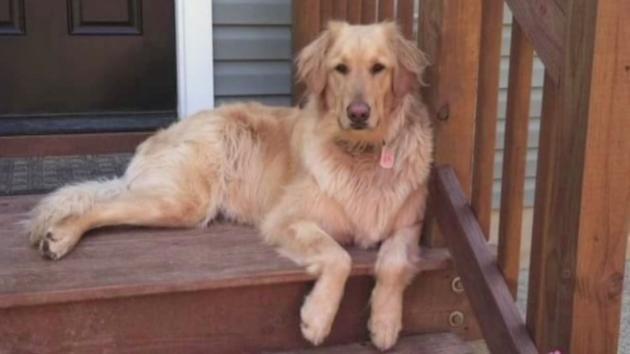 Dog Dies of Heat Stroke at Petco Grooming Salon