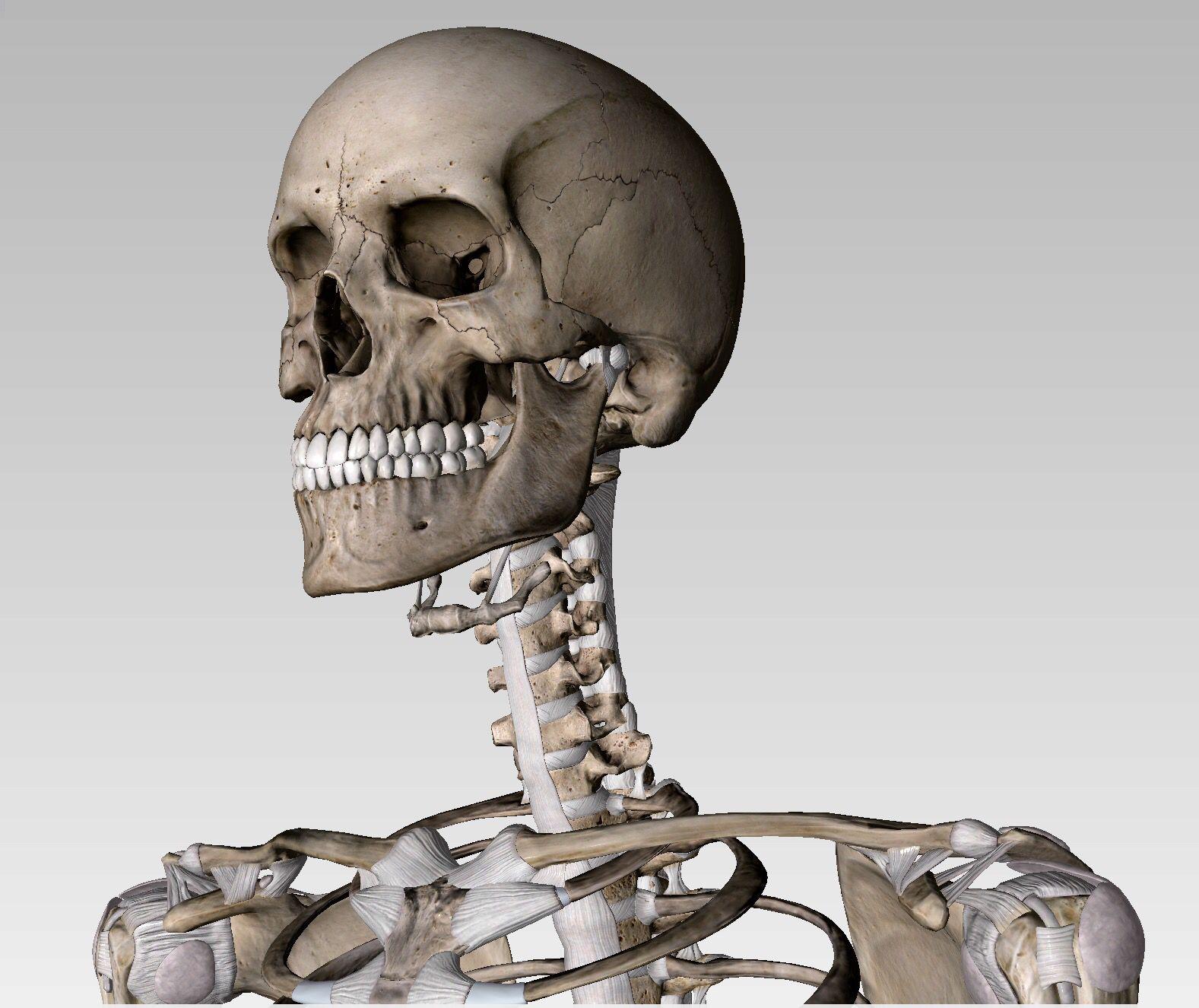 Hyoid bone (\