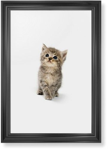 Kitten Framed Print, Black, Classic, None, None, Single piece, 20 x 30 inches