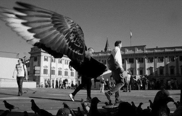 крила