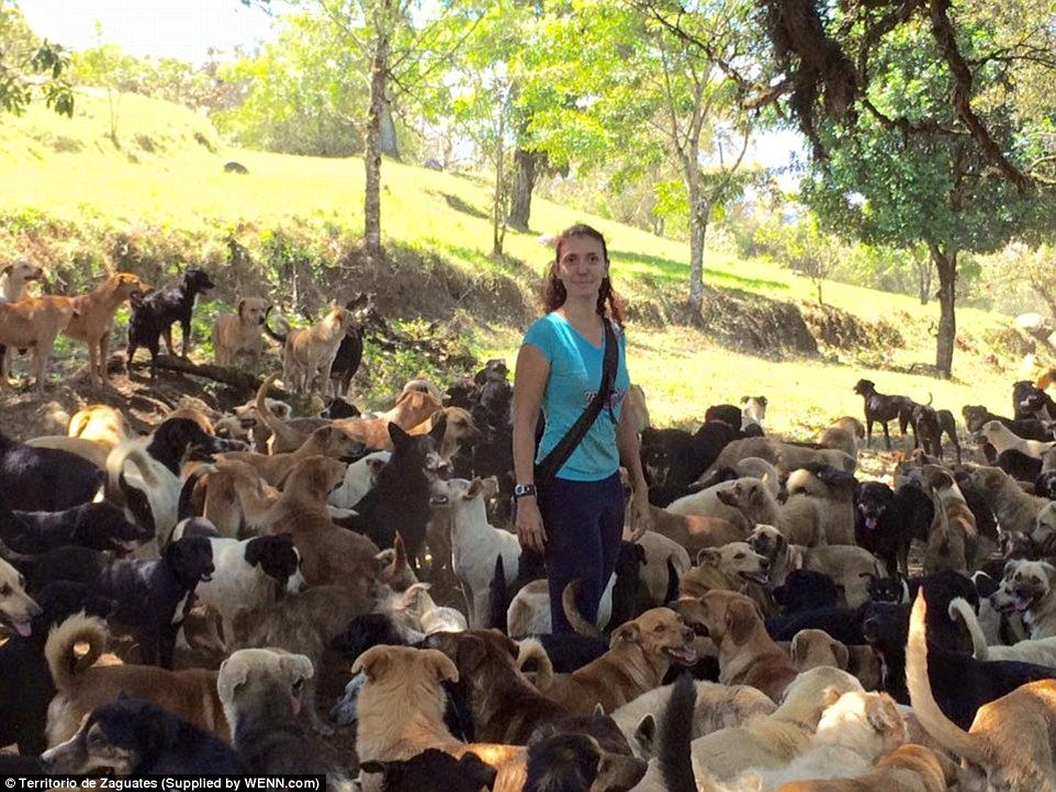 Land Of The Strays In Costa Rica Http Www Dailymail Co Uk News