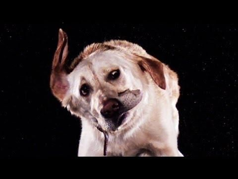 Animals Drying Off In Slow Motion - #cute #pets