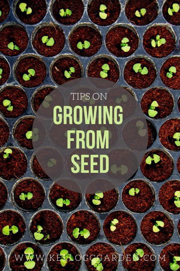 Tips to successfully growing plants from seed.   What plants can you grow from seed? Most gardeners grow veggies, herbs, and flowers from seed successfully. Some are easy (sunflowers, beans) while others require a bit more finesse (tomatoes or any other tiny seed).