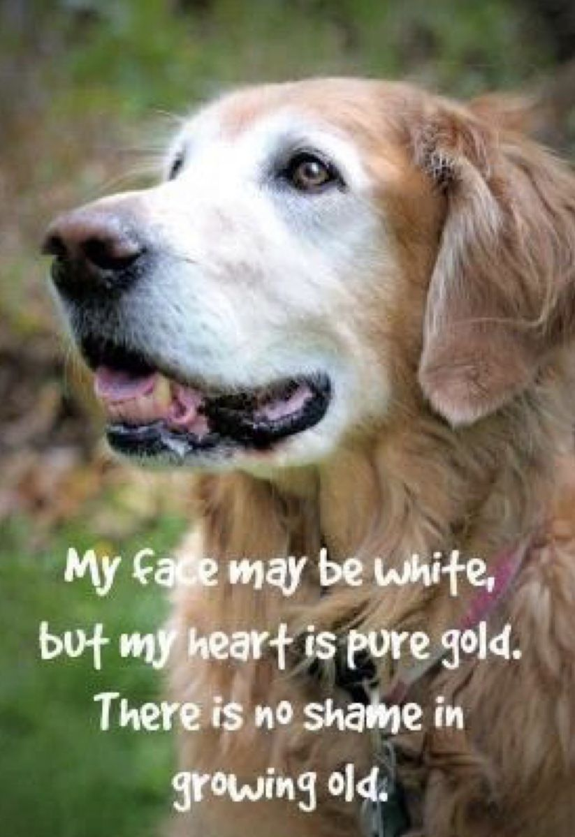 Old Dog Quotes Image By Alicia On Four Legged Angels Dog Quotes
