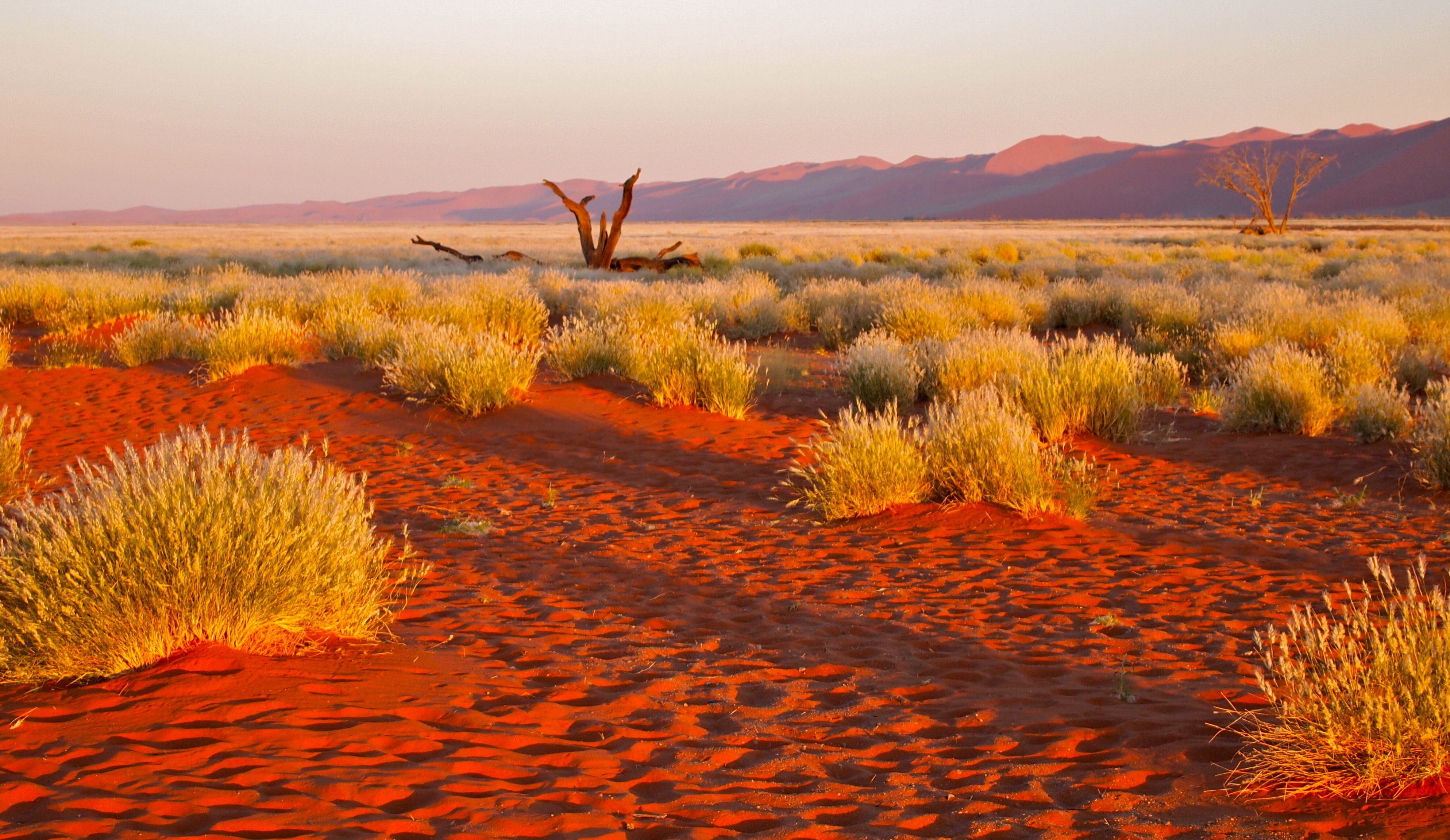 Kalahari Desert The Namid Desert In Namibia Africa Has