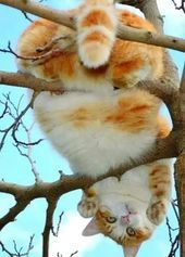 Howya doin down there Click the Photo For More Adorable and Cute Cat Videos and