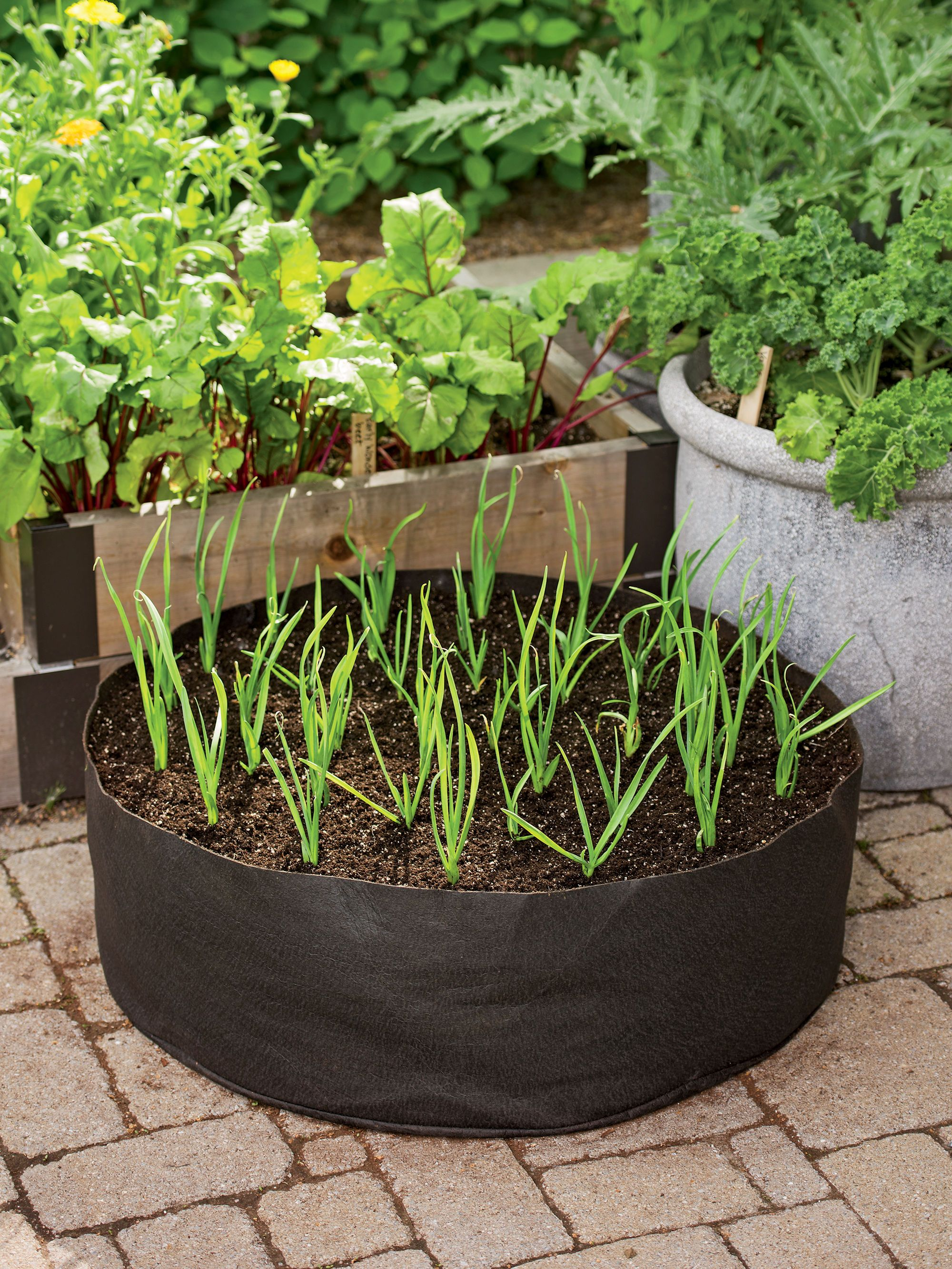 Growing Garlic in the Garlic Grow Bag Kit