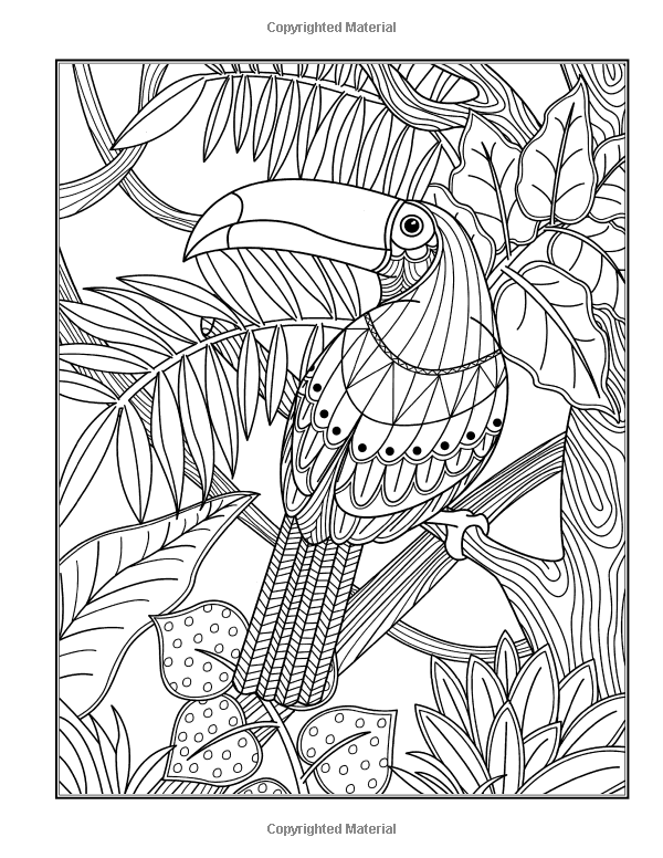 Pin On Coloring Birds