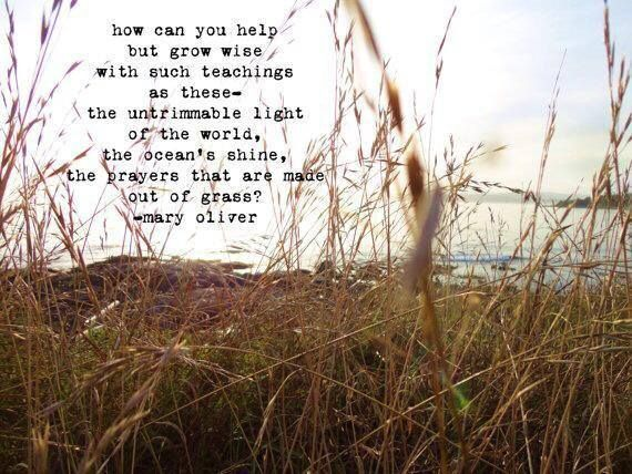 Mary Oliver My Taste In Poetry Pinterest Mary Oliver Quotes