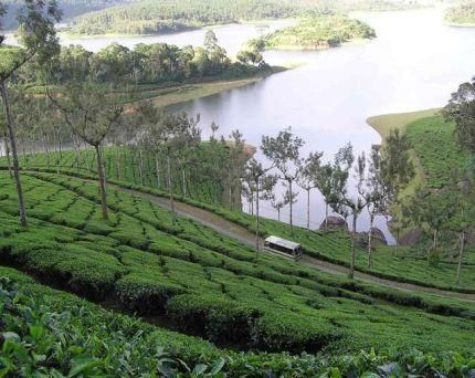 From tea-plantations to spice-gardens this #tour is a #delight for the senses. Drown yourself in the various aromas each different from the other. While at Munnar you have miles upon miles of endless #tea-plantations while Thekkady brings you a wide array of spices, including vanilla, pepper, cinnamon to name a few. See more at:http://easygotrip.com/Holidaydetail/Default.aspx?HolidayID=282