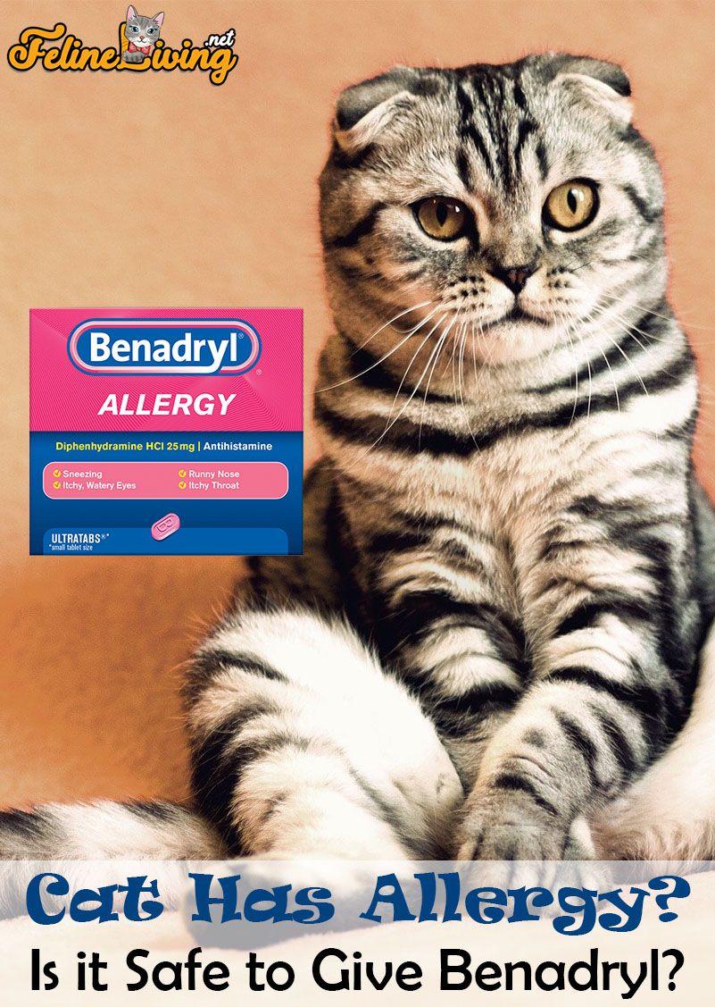 Felineliving Net In 2020 Cat Medicine Cats Cat Allergies