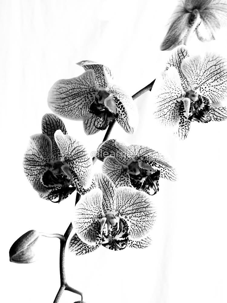Black And White Orchid Tattoo Design By Ellearden Orchid Tattoo Picture Tattoos White Orchids