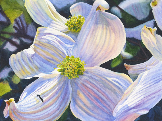 floral watercolor original painting white dogwood by cathy