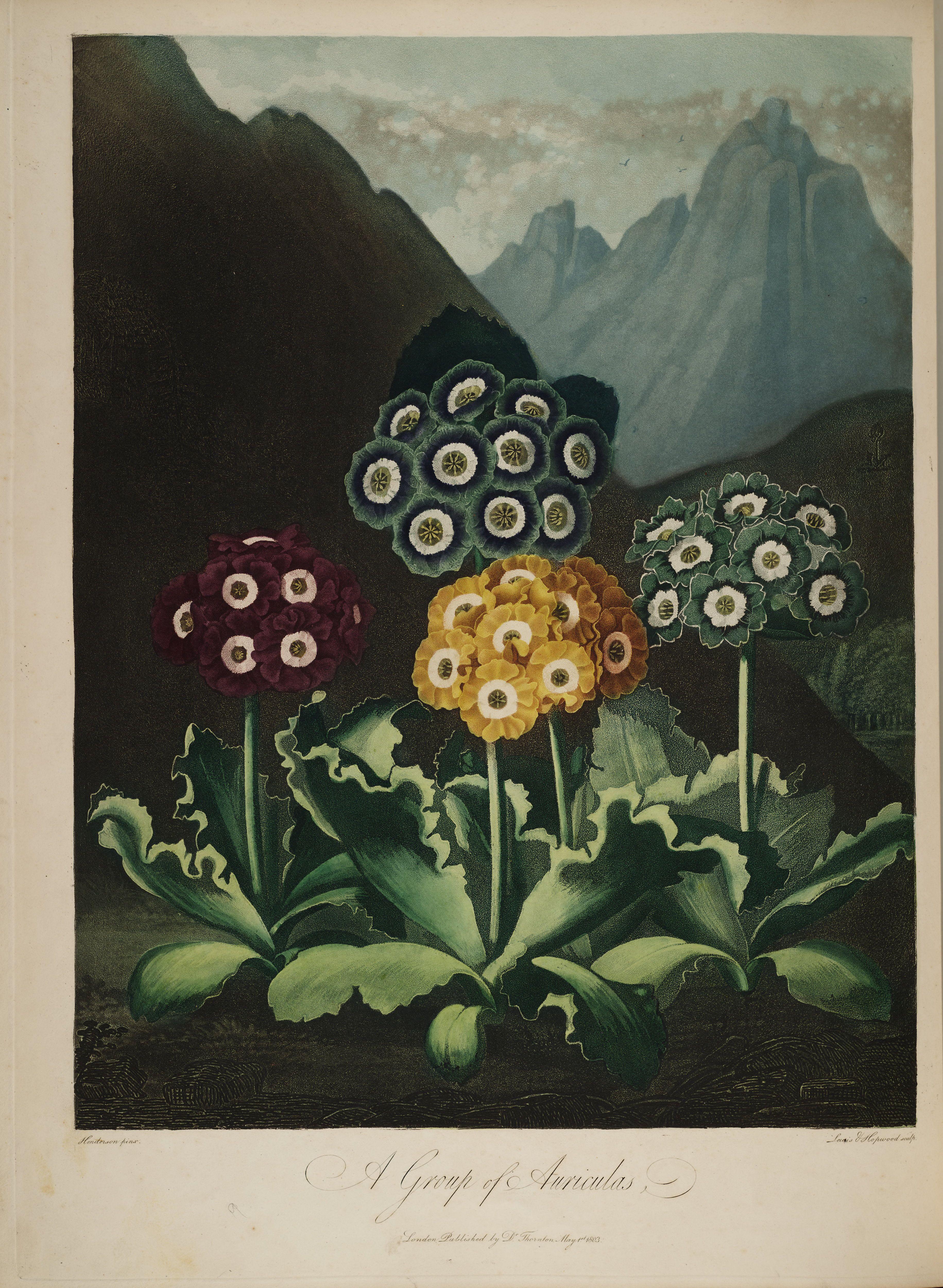 temple-fleur-illustration-Robert-Thornton-07 - La boite verte