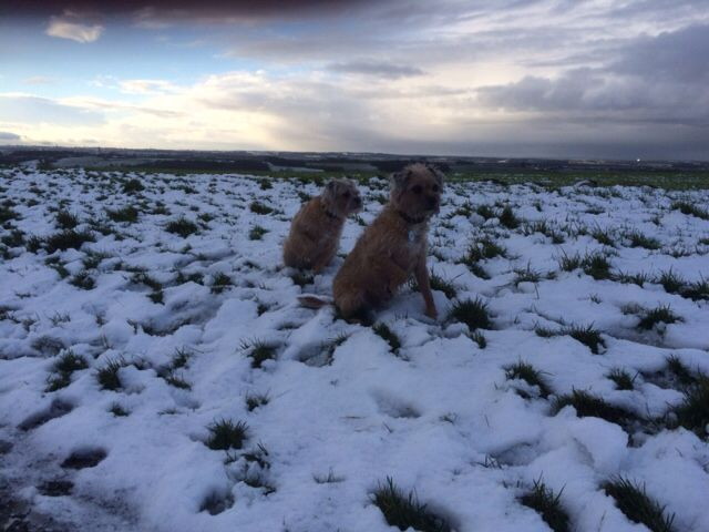 Oscar and Poppy What's the white stuff ?