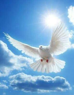 Hasta El Cielo Espiritu Santo Paloma Espiritu Santo Aves Volando