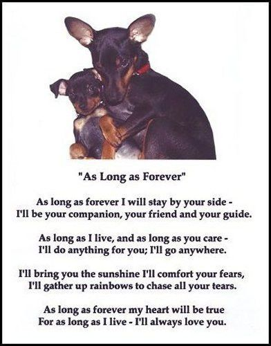 Beautiful Min Pin Print Quot As Long As Forever Quot Puppy Poem