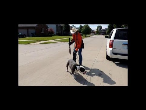 Training Your Dog To Walk On The Leash The Online Dog Trainer
