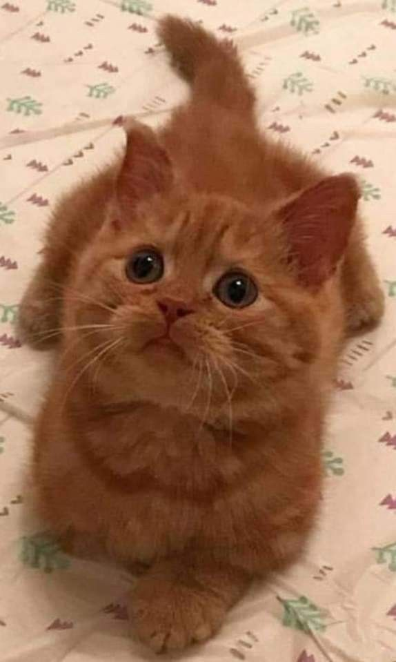 #gingerkitten