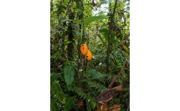 Reserva Serra Bonita: esperança na Mata Atlântica - Galeria de Fotos