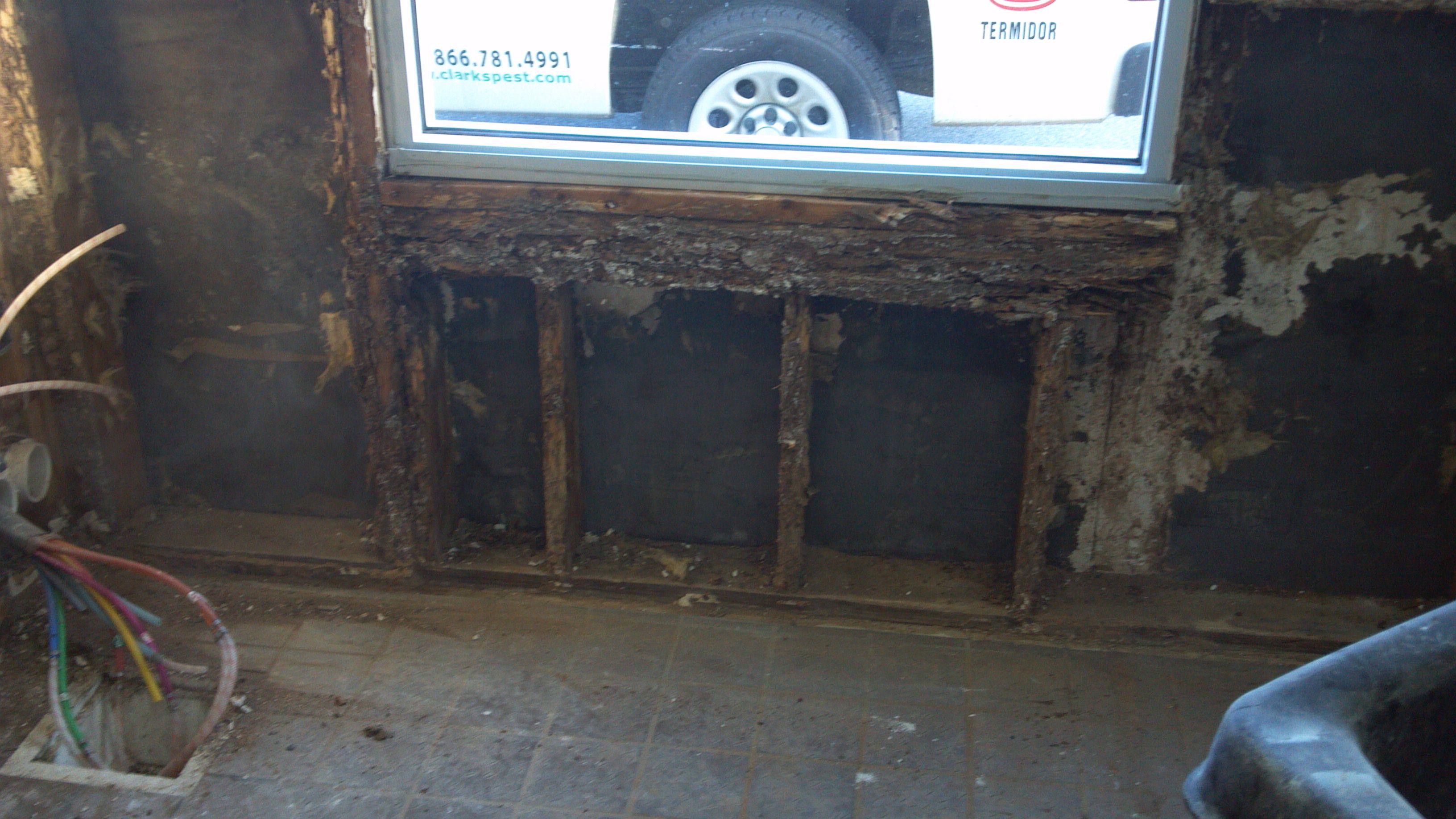 Severe Termite Damage To Window Sill Termite Damage Termites