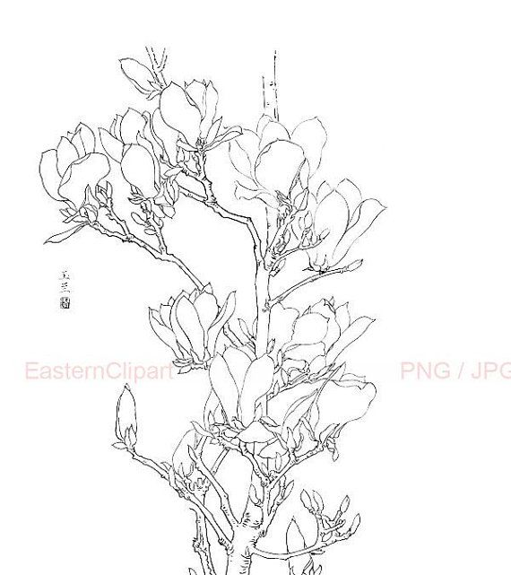 Chinese Flower Line Drawing : Chinese line drawing png digital download clip art