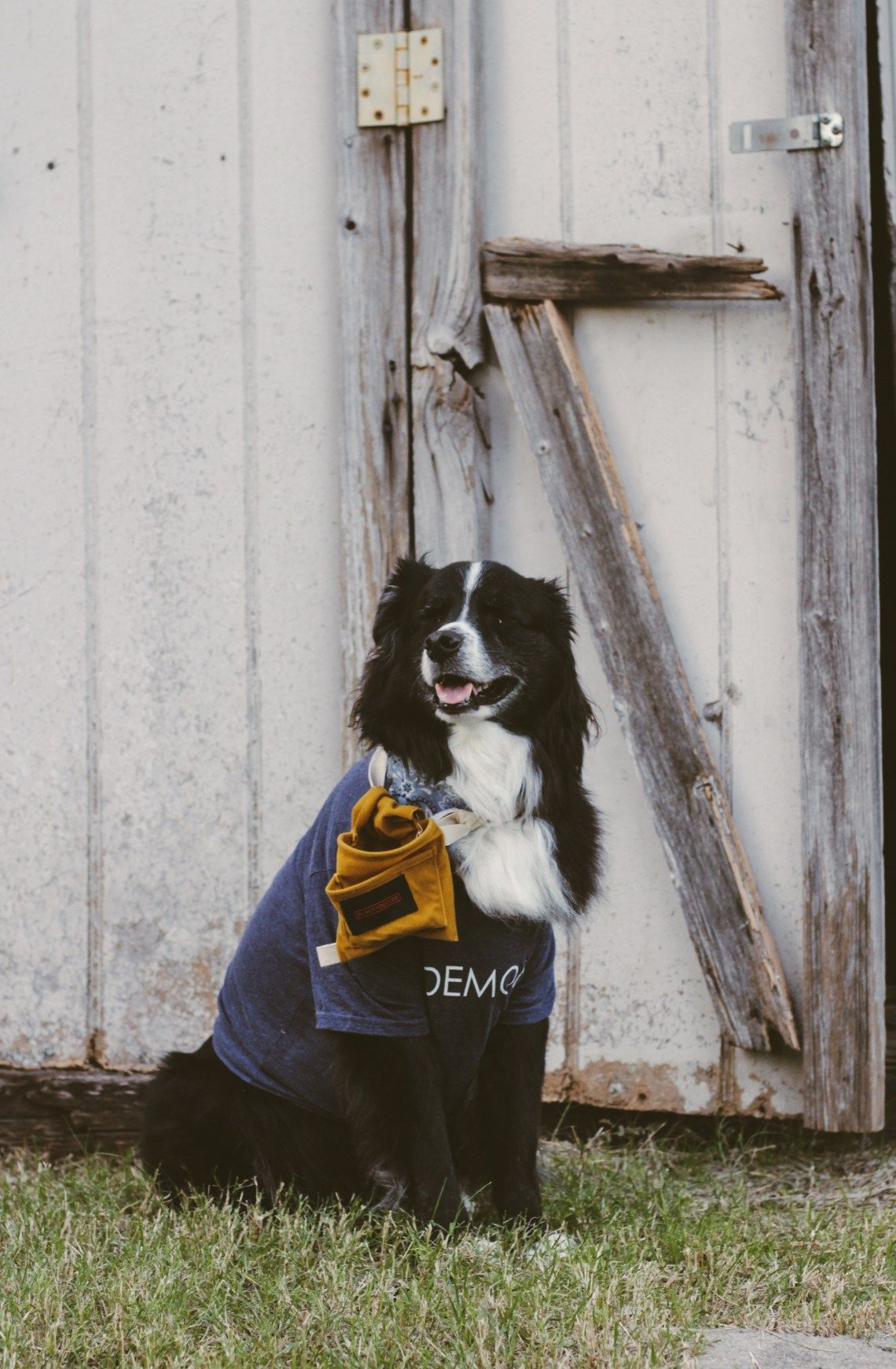 Chip and Joanna Gaines costume - for dogs!