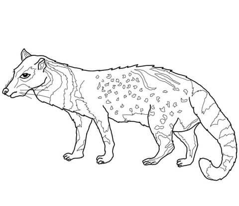 Civeta Africana Dibujo para colorear | animales | Pinterest ...