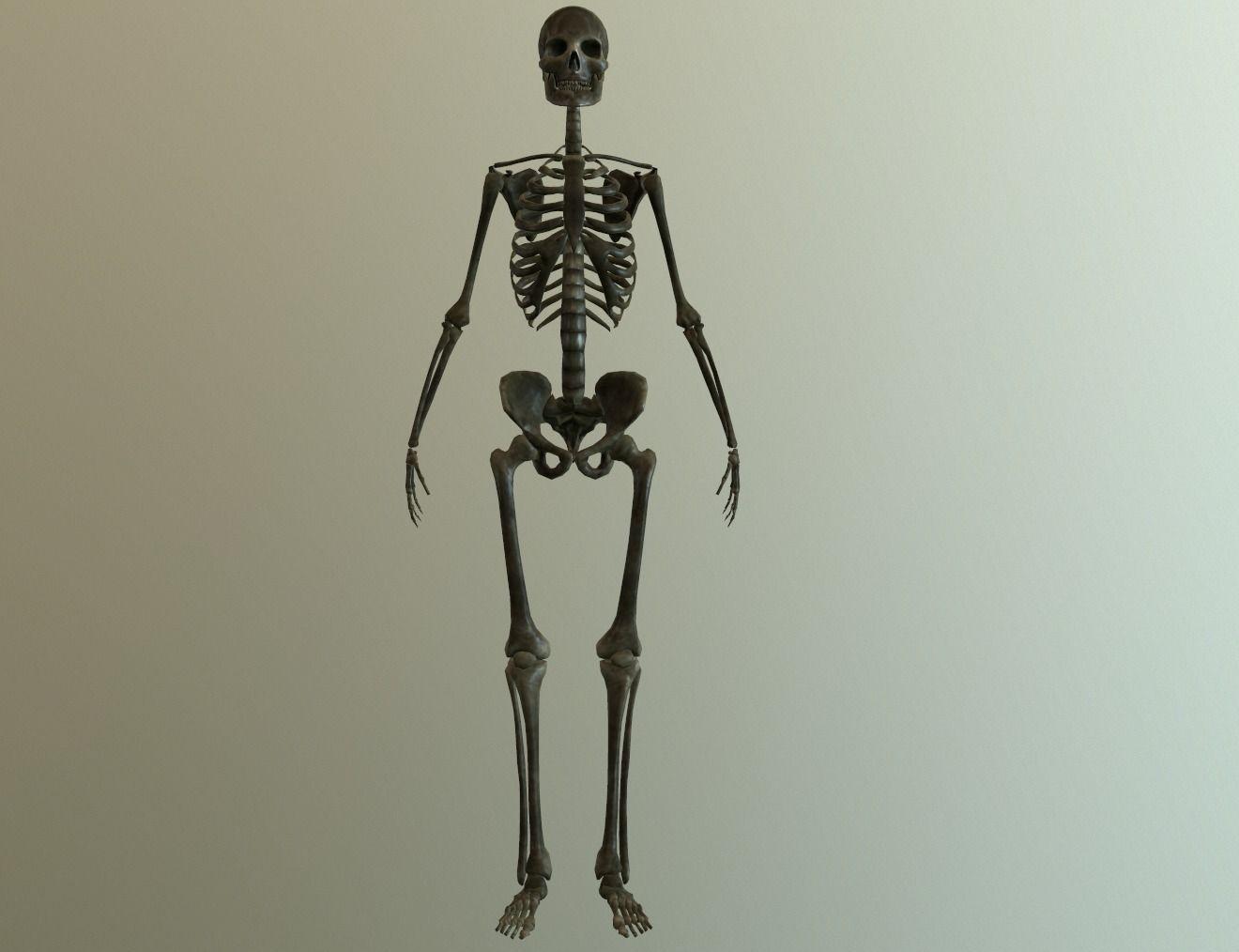 Bones   3D model   3D Characters   Pinterest   Body bones, Anatomy ...