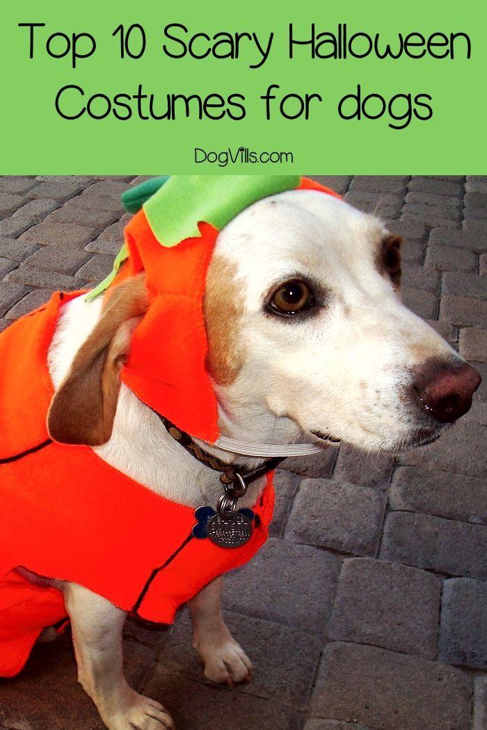 Top 10 Scary Halloween Dog Costumes Dog halloween