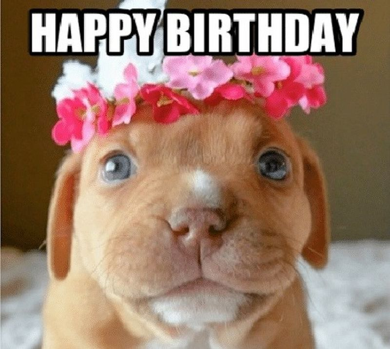 101 Funny Happy Birthday Dog Memes For Paw Lovers Everywhere Happy Birthday Dog Birthday Meme Dog Happy Birthday Funny Dog