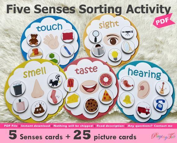 Five Senses Sorting Activity Printable 5 Senses Sorting   Etsy