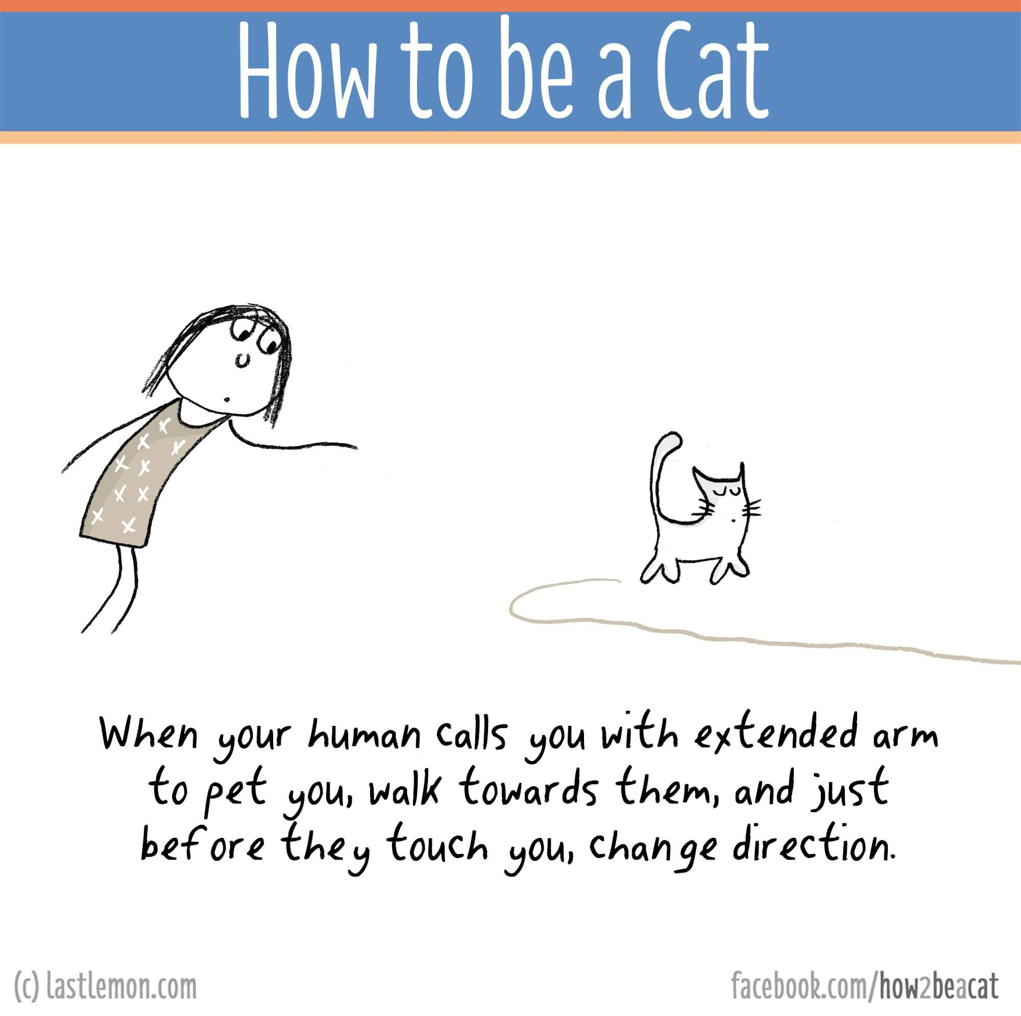 How To Be A Cat Cute Cats Dogs Cat Jokes Fancy Cats