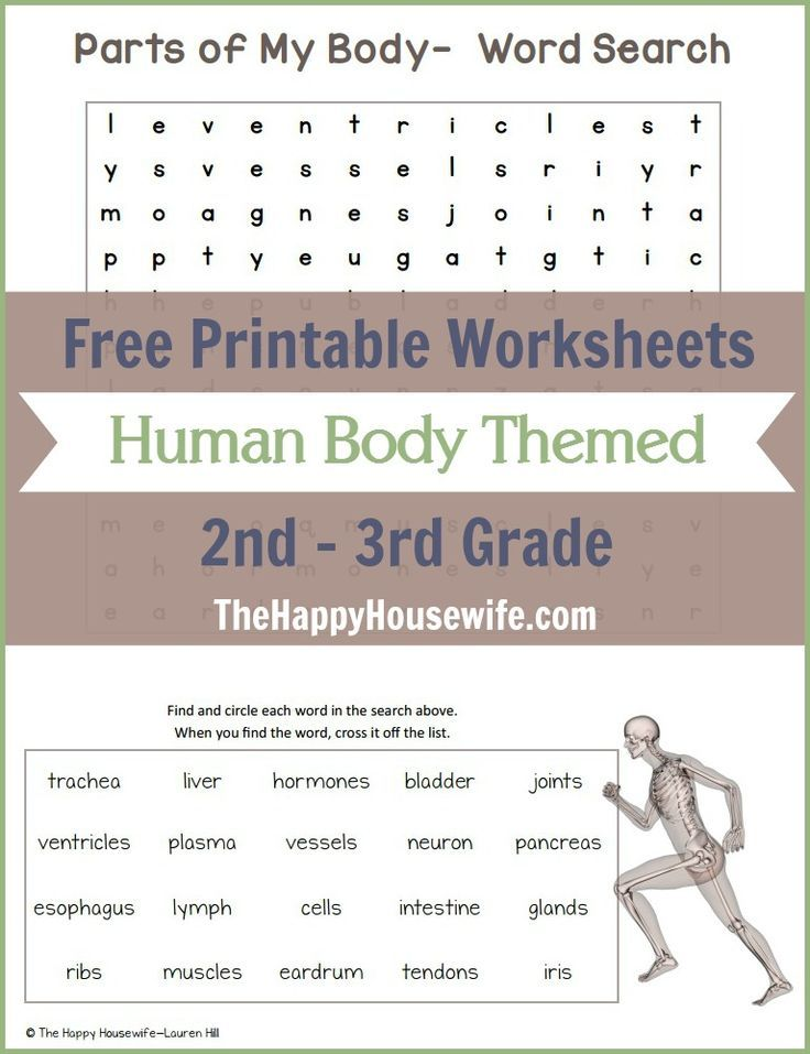 Free Printable Human Body Themed Worksheets for 2nd 3rd