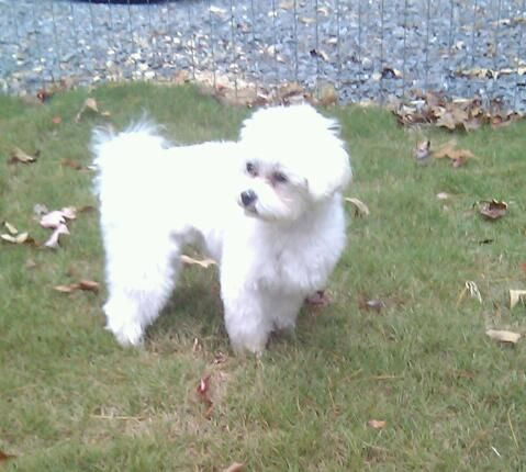 Adopt Daizy Mae A On Pet Adoption Adoption Dogs
