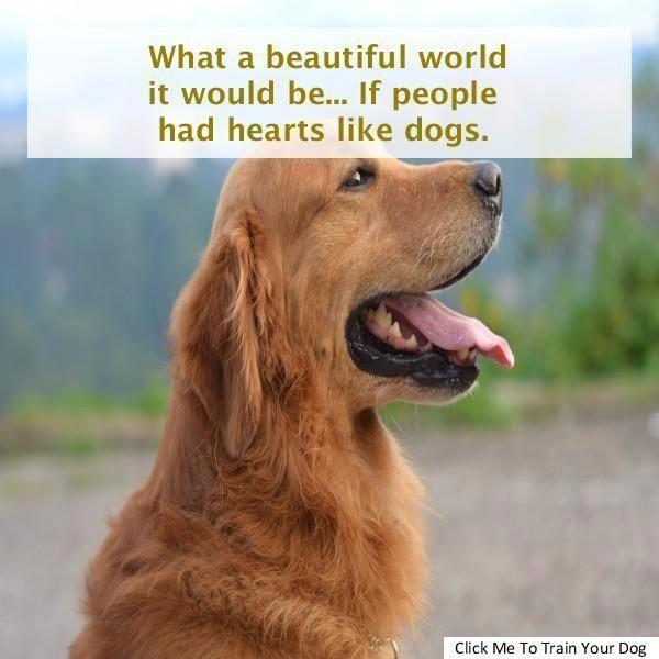 Understanding Dog Training Online Click Resources Incredible Dog