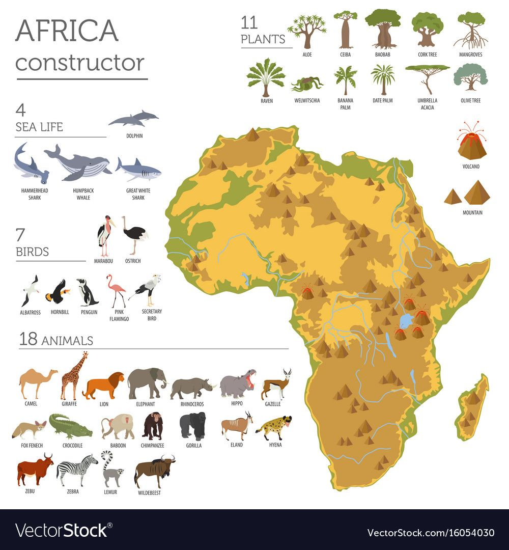 Flat Africa Flora And Fauna Map Constructor Vector Image On