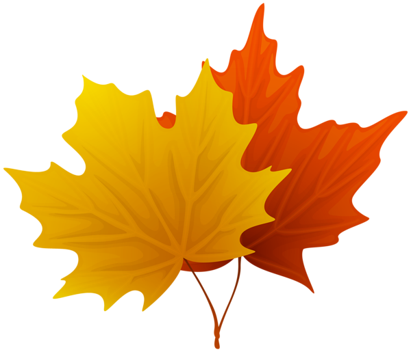 Fall Maple Leaves Png Decorative Clipart Image Leaf Clipart Clip Art Clipart Images