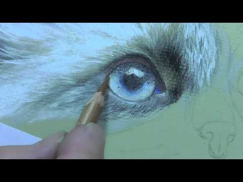 4 siamese kitten eye tutorial in pastel pencils youtube cat
