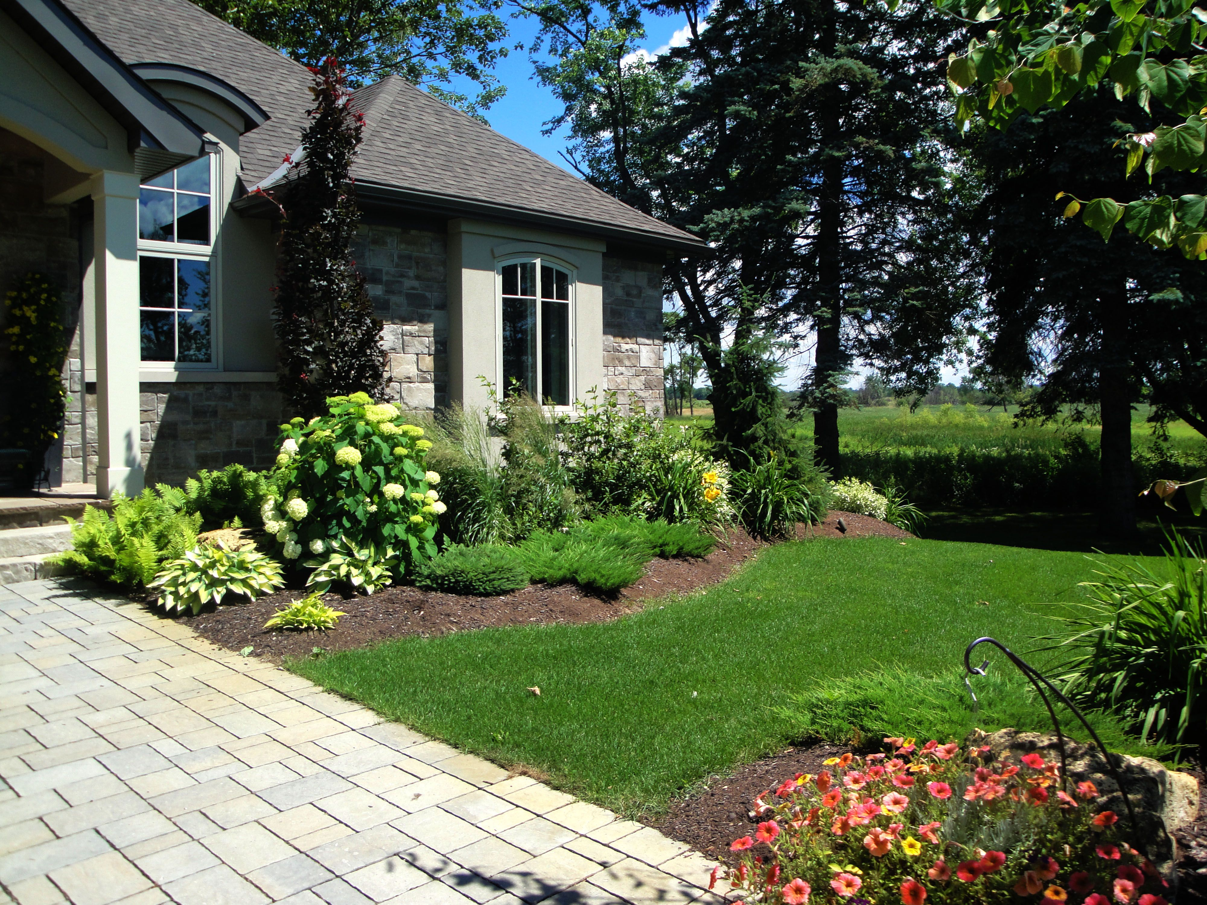 Hydrangeas, junipers, hostas, ferns, and grass in a front ...