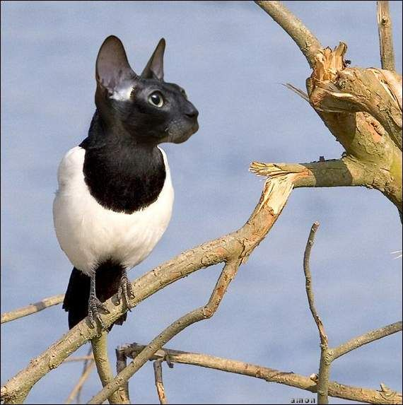 Cat And Bird Mixed Together   Funny Animals   Pinterest ...