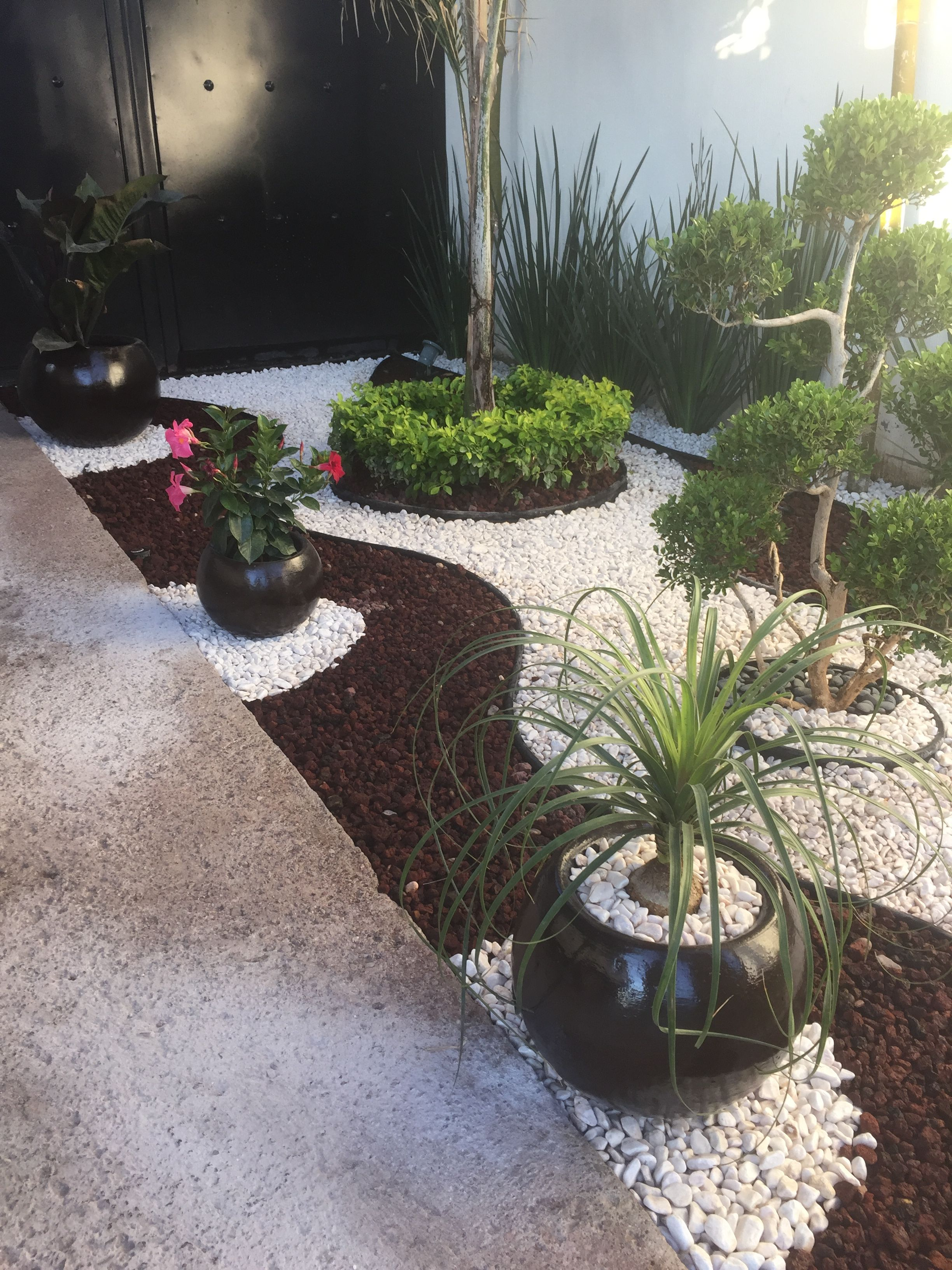 Palm Tree And Hybiscus Pots With Images Front Yard Garden